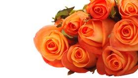róże pomarańczowe Zdjęcia Royalty Free