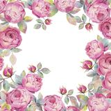 róże Ręka malująca akwareli ilustracja Tło ilustracja wektor