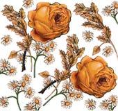 Róże. Rumianki. Piękny tło z przepływem Zdjęcie Stock