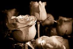 róże sepiowe obraz stock