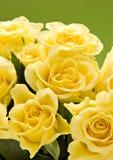 róże się blisko Zdjęcie Royalty Free