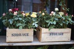 Róże w drewna pudełku Obraz Royalty Free