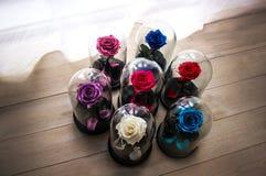 Róże w kolbie pod szkłem Jako prezent dla wakacje zdjęcia royalty free