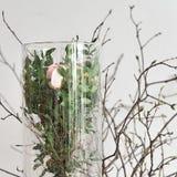 Róże w szkła i wiosny gałąź 2 Zdjęcie Royalty Free