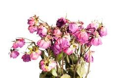róże więdnąć Obrazy Royalty Free