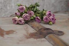 róże więdną Fotografia Stock