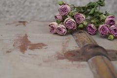 róże więdną Zdjęcie Royalty Free