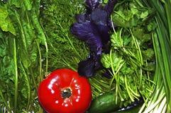 Różna świeża zieleń, pomidor i ogórek, obraz royalty free