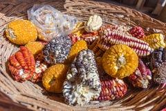 Różna kukurydza i kukurudza pisać na maszynie wewnątrz kosz Zdjęcia Royalty Free