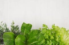Różna zieleń kapuje dla wiosny sałatki na białym drewnianym tle, odgórny widok, dekoracyjna rama Zdjęcie Stock