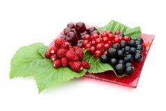 Różne jagody kłama na czerwień talerzu Fotografia Royalty Free