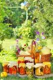 różne jesień prezerwy zdjęcie royalty free