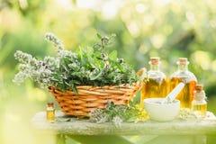 Różne lecznicze rośliny od ogródu Fotografia Stock