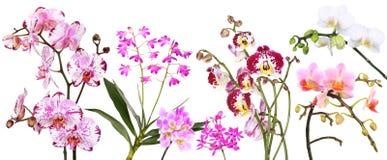 Różne orchidee ilustracji