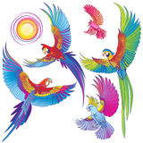 Różne papugi na białej tło kolekci Zdjęcia Stock