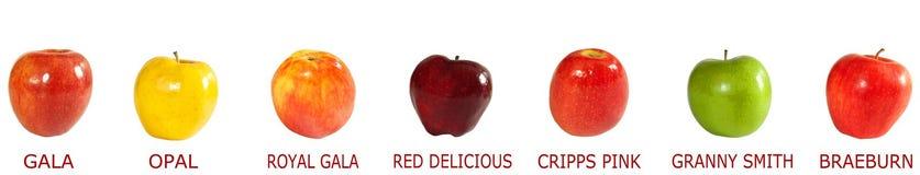 Asortyment jabłka zdjęcia royalty free