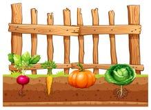 różne warzywa ustalonymi royalty ilustracja