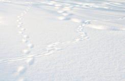 Różni ślada w śnieżnym polu Fotografia Stock
