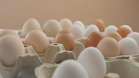 Różni colour jajka od różnego drobiu Zdjęcie Royalty Free