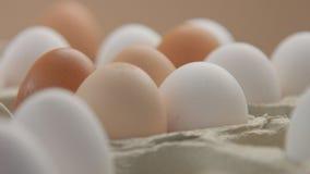 Różni colour jajka od różnego drobiu Zdjęcia Stock