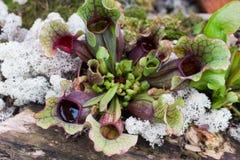 Różni gatunki rośliny w tropikalnym ogrodowym raju fotografia stock