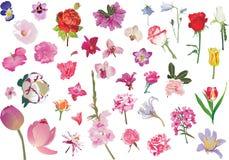 różni kolekcj flowes odizolowywali biel Obraz Royalty Free
