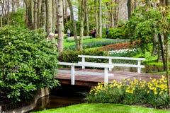Różni kolorów tulipany na brzeg rzeki w Keukenhof parku w Amsterdam terenie, holandie Wiosny okwitnięcie w Keukenhof Obraz Royalty Free