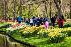 Różni kolorów tulipany na brzeg rzeki w Keukenhof parku w Amsterdam terenie, holandie Wiosny okwitnięcie w Keukenhof Zdjęcia Royalty Free