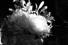 Różni kwiatów środki które przychodzili out Obraz Royalty Free