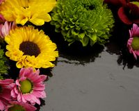 Różni kwiaty obraz royalty free