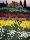 Różni kwiaty z różnymi colours Obraz Royalty Free