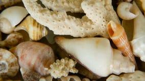 Różni mieszani kolorowi seashells jako tło Różnorodni korale, morski mollusk i przegrzebek skorupy, zbiory wideo