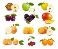 różni owoc grupy rodzaje royalty ilustracja