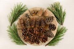 Różni rożki iglasty drzewo i cztery gałąź sosna na białym tle, odgórny widok zdjęcia royalty free