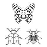 Różni rodzaje insekty zarysowywają ikony w ustalonej kolekci dla projekta Insekta członkonoga symbolu zapasu wektorowa sieć Fotografia Stock
