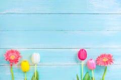 Różni rodzaje kolorowi kwiaty w linii na błękitnym drewnianym tle zdjęcia royalty free