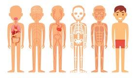 Różni systemy ciało ludzkie diagrama ilustracja Obraz Royalty Free