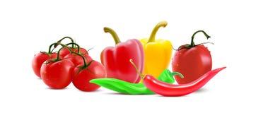Różni warzywa, Chłodny peper i pomidorowe ikony, Wektorowy jarzynowy sztandar ilustracji
