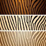 różnicy zebra Fotografia Stock