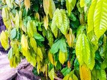 Różnobarwni kwiatów liście Obraz Stock