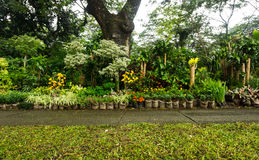 Różnorodna roślina, bonsai drzewo i kwiat jakby, układaliśmy jak dżungla i bubel troszkę kwiaciarni fotografią brać w Dżakarta obraz royalty free