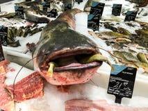Różnorodna ryba Dla sprzedaży W Rybiego rynku sklepie Fotografia Stock