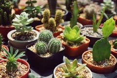Różnorodna tłustoszowata garnek roślina dla domowej dekoraci obrazy royalty free