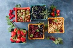 Różnorodne świeże jagody Fotografia Stock