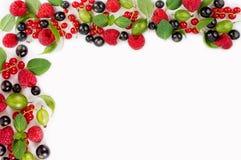 Różnorodne świeże lato jagody Dojrzali malinek, rodzynków, agrestów, mennicy i basilu liście, Obrazy Royalty Free