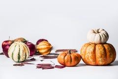 Różnorodne banie na białym tle z spadkiem opuszczają, frontowy widok Jesieni warzywa, dziękczynienia jedzenie obraz stock