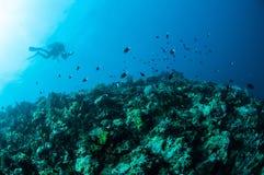 Różnorodne ciężkie rafy koralowa w Gorontalo, Indonezja Obraz Stock