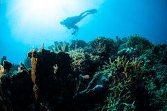 Różnorodne ciężkie rafy koralowa w Gorontalo, Indonezja Zdjęcia Stock