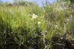 Różnorodne gór rośliny, kwiaty i Obraz Stock