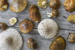 Różnorodne pieczarki i jesień liście na starym drewnianym stole Zdjęcie Royalty Free